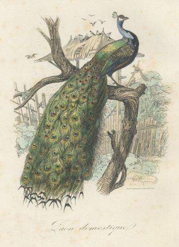 博物図版「自然史博物館」(フランス 1854年)