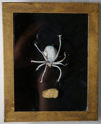 蜘蛛 ブローチ