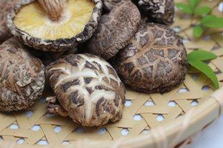 < 人生で初めて出会う!美味しい干ししいたけ> 115品種の干し椎茸(どんこ)
