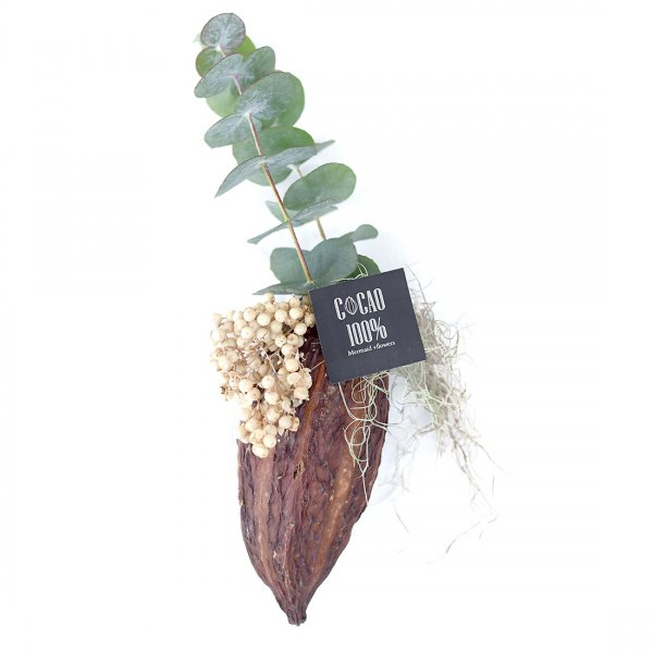 Dry cacao-ドライカカオ-