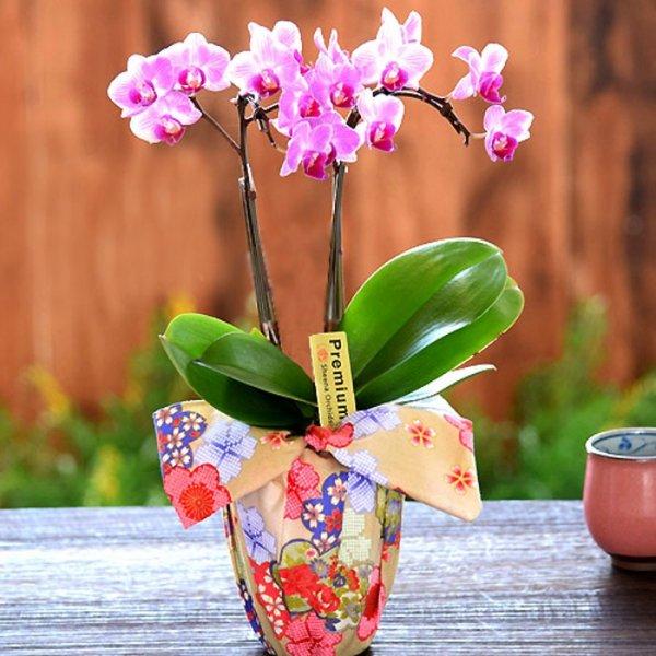 テーブル胡蝶蘭-小風呂敷ラッピング-
