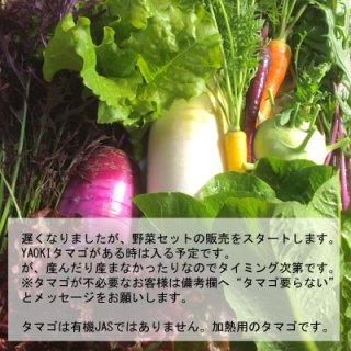 季節のオーガニック野菜Mセット