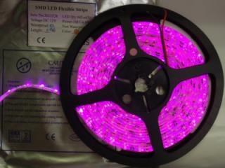 3528 300/5M PINK 12VDC