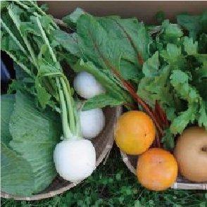 九州産 農家直送 旬の野菜セット
