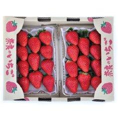 萩原さんの美味しいイチゴ古都華(ことか)