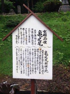 山形県産亀の尾【JAS有機認証】