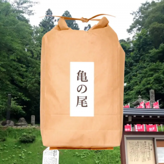 山形県産亀の尾【JAS有機認証】5�