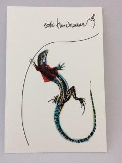 ショカ庫 ポストカード 赤ジャケ カールコーチカベカナヘビ