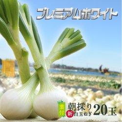 浜松産白玉ねぎプレミアムホワイト葉付きA級品(L20玉)【送料無料】