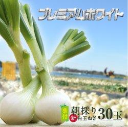 浜松産白玉ねぎプレミアムホワイト葉付きA級品(L30玉)【送料無料】