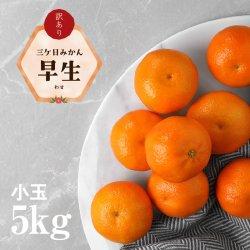 【小玉】訳あり三ケ日みかん「早生(わせ)」小玉5kg(2S〜4Sサイズ)【送料無料】