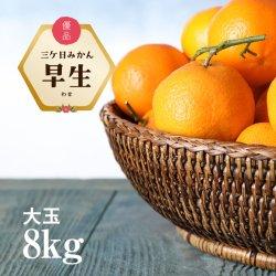 【大玉】三ケ日みかん「早生(わせ)」大玉8kg(2L〜4Lサイズ)【送料無料】