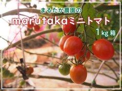 marutakaミニトマト(1kg)【送料無料】