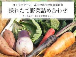 富士の恵み オトワファームの採れたて野菜詰め合わせセット【送料無料】