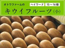 オトワファームのキウイフルーツ(小/15〜16玉)【季節限定】【送料無料】