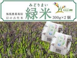 わたなべ農園 幻の古代米『緑米』300g×2個セット【送料無料】