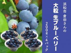 倉田さんのお任せ 大粒の生ブルーベリー200g×4パック【送料無料】