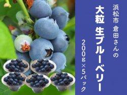 倉田さんのお任せ 大粒の生ブルーベリー200g×5パック【送料無料】