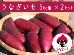うなぎいも 5kg箱×2セット【送料無料】