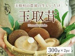 玉取杉山農園の生しいたけ「玉取茸」300g×2パック(10〜12個前後)【送料無料】