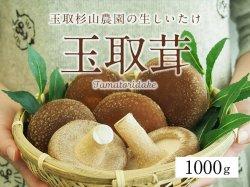 玉取杉山農園の生しいたけ「玉取茸」1000g(15〜17個)【送料無料】