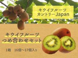 キウイフルーツカントリーJapanのキウイつめ合わせセット【送料無料】