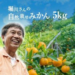 堀川さんの三ヶ日産自然栽培みかん5kg(S〜LL サイズ)【送料無料】