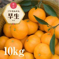 三ケ日みかん「早生(わせ)」10kg(S〜LLサイズ)【送料無料】