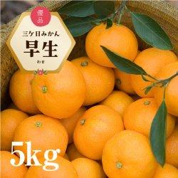 三ケ日みかん「早生(わせ)」5kg(S〜LLサイズ)【送料無料】