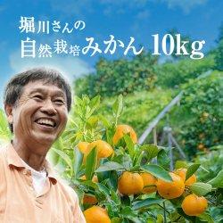 堀川さんの三ヶ日産自然栽培みかん10kg(S〜LL サイズ)【送料無料】