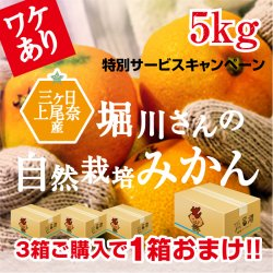 【訳あり】堀川さんの三ヶ日産自然栽培みかん5kg(サイズ不選別)【送料無料】