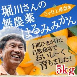 堀川さんの三ヶ日産無農薬はるみみかん5kg(ミックスサイズ)【送料無料】