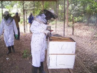 養蜂プロジェクト支援