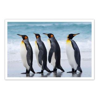 ポストカード フォークランド諸島1〜キングペンギン