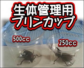 生体管理用プリンカップ250cc 100個セット