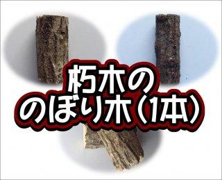 朽木ののぼり木(1本)