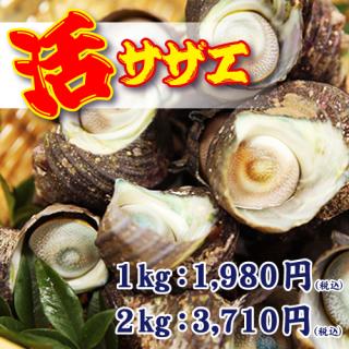 鮮度抜群!三重県産サザエをたっぷり堪能!壺焼きにお刺身、食べ方いろいろ!|活サザエ|海人