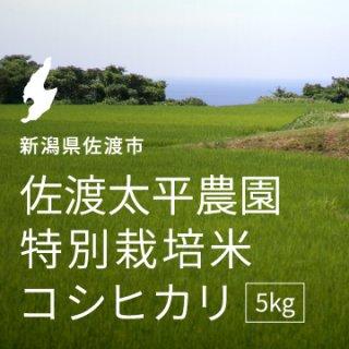 <img class='new_mark_img1' src='https://img.shop-pro.jp/img/new/icons1.gif' style='border:none;display:inline;margin:0px;padding:0px;width:auto;' />佐渡太平農園 特別栽培米コシヒカリ 5kg