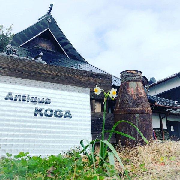 Antique Kogaの画像