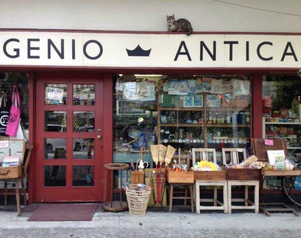 GENIO ANTICAの画像