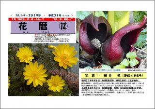 花暦2019年カレンダー