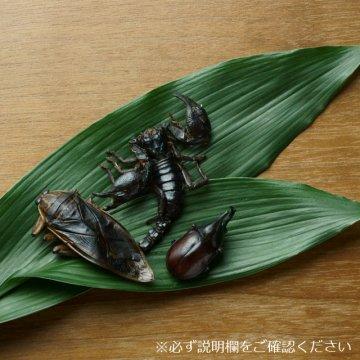 スペシャルセット - アジアンフォレストスコーピオン・タガメ・カブトムシ(販売終了商品)