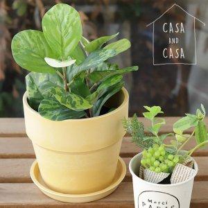 【CASA & CASA】アーバンプランツポット(Sサイズ)