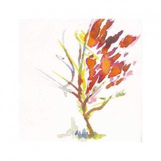 街路樹のためのドローイング#15(M)