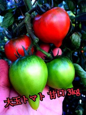 大玉デアルケトマト(甘口)3kg S.M.L混 2021年1月のお届けご予約です。