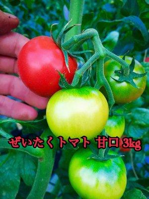ぜいたくデアルケトマト約3kg   今期売り切れです!12月お届け分のご予約注文になります。