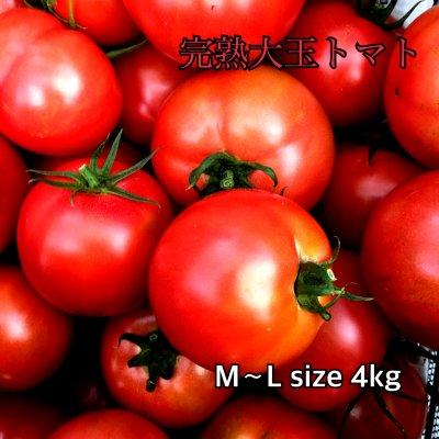 完熟大玉トマト4kg  M〜LLサイズ 次回はまた2020年12月中下旬よりお願いします。(高糖度系ではなく、トマトらしいトマトです)