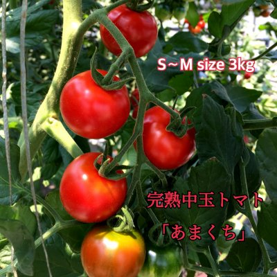 デアルケトマト中玉フルティカ約3kg   S・M・Lサイズ混 現在もご予約多く、2020年1月−2月のお届け予約になります。