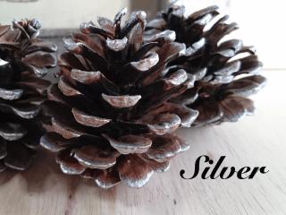 煌びやかな輝き「Silver/シルバー」