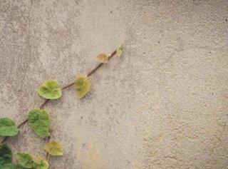 コンクリート壁の塗り方